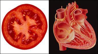 Tomat dan Jantung