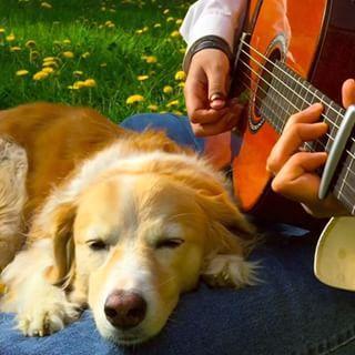 Maple The Dog! Anjing Berselera Musik Tinggi yang Menjadi Bintang Baru Vine