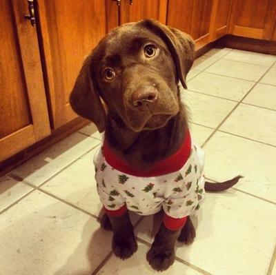 Melihat Imutnya Anjing Berpiyama Berikut Dapat Cerahkan Harimu (Part 1)