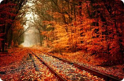 Perubahan Terowongan Cinta Sesuai Musim