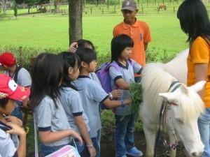 Belajar Merawat Kuda