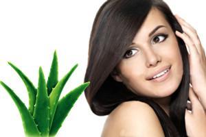 Tips Rambut Sehat dan Indah dengan Lidah Buaya