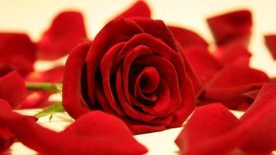 Cara Alami Atasi Jerawat Dengan Bunga