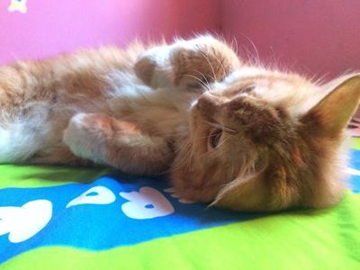 #FORUM Bulu kucing bikin mandul dan berbagai penyakit, menurut kamu?