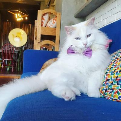 [FORUM] Rekomendasi Kafe Kucing Lucu di Jakarta dan Bandung