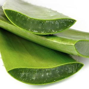 [FORUM] Bikin aloe vera gel sendiri? worth to try or no?