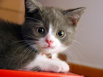 [FORUM] Bener ngga sih kalau kucing dikasih makan kerupuk malah bisa bikin  bulunya jadi rontok?