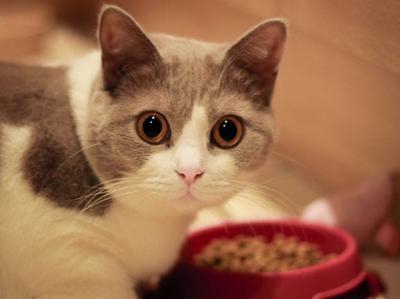[FORUM] Benarkah memelihara kucing jadi susah hamil?