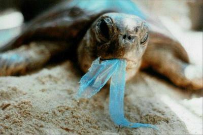 "[FORUM] Kamu setuju gak dengan kampanye ""Kurangi Pemakaian Sedotan Plastik""?"