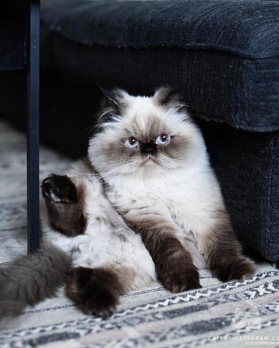 [FORUM] Mau adopsi anak kucing, dimana ya?