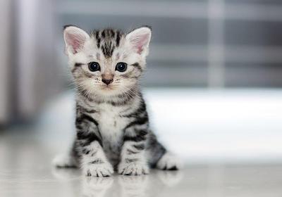 [FORUM] Ada yang Pelihara Kucing? Merk Makanan yang Bagus Apa aja sih?