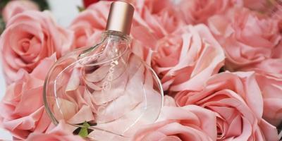 Rose yang Romantis