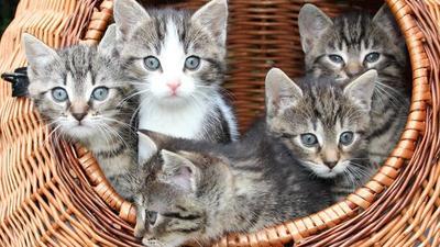 [FORUM] Ada yang pernah digigit kutu kucing/peliharaan berbulu lainnya?