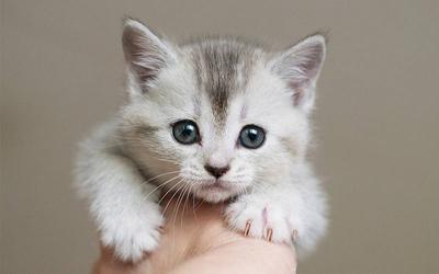 [FORUM] Mau cari kucing yang bisa di adopsi tuh dimana ya?