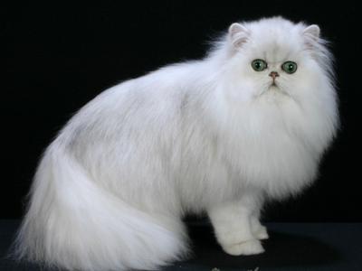 4. Memiliki Hewan Berbulu Seperti Kucing