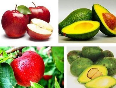 Diet Untuk Pemilik Golongan Darah O