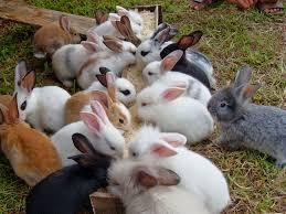[FORUM] Sate kelinci tuh halal atau engga?????