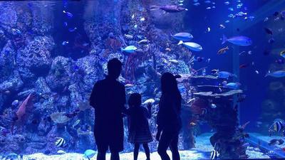 6 Hal Seru yang Bisa Kamu Lakukan di Jakarta Aquarium, Dijamin Betah!