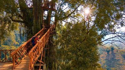 Rumah Pohon dan Jembatan Kayu Gantung, Curug Ciherang