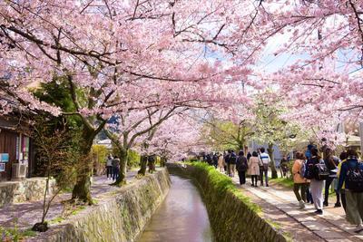 5 Lokasi di Jepang yang Pas untuk Menikmati Indahnya Bunga Sakura