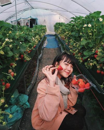 Berpose Cantik Sambil Mengumpulkan Buah Strawberry