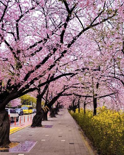 1. Yeouido Park