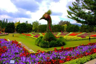 5. Taman Bunga Nusantara