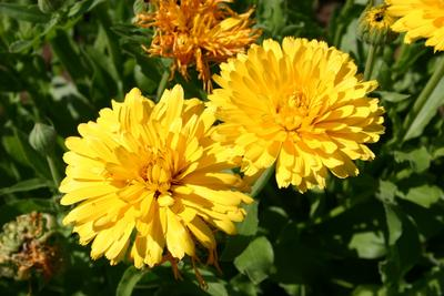 Deretan Bunga yang Sering Dijadikan Ekstrak dalam Skincare
