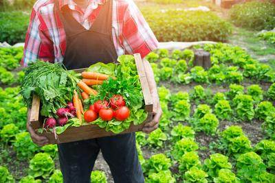 3. Mengonsumsi Makanan Organik