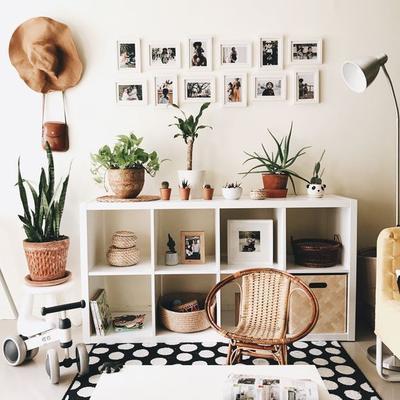 5 Tanaman Hias Sehat Pembersih dan Percantik Ruangan