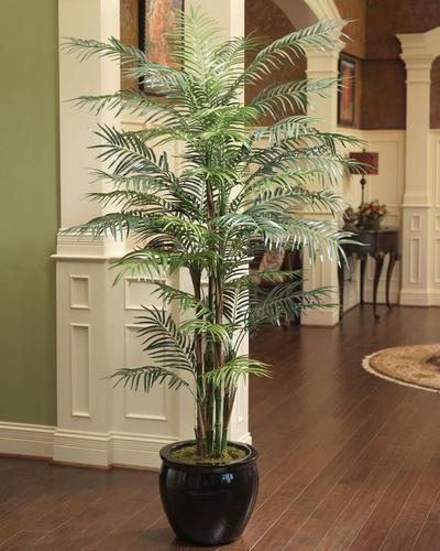 Reed Palm/Bamboo Palm