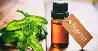 Segera Hirup Aromatheraphy Peppermint