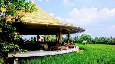 5 Kafe yang Unik dengan Pemandangan Indah di Ubud Bali, Harganya Terjangkau!