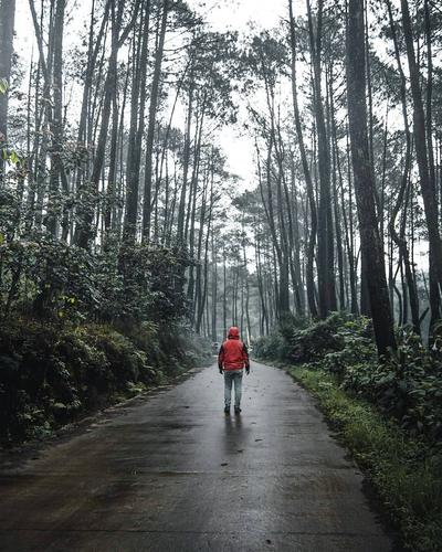 Hutan Pinus Rahong