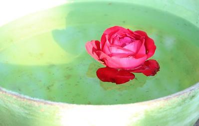 Selain Mengatasi Jerawat, Air Mawar Mampu Cegah Penuaan Dini!