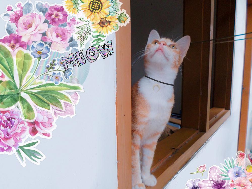 PicsArt_08-20-04.50.02.jpg